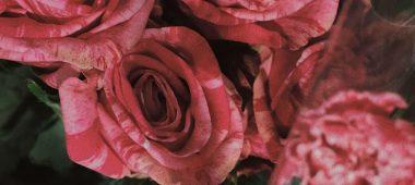 value_added_rose